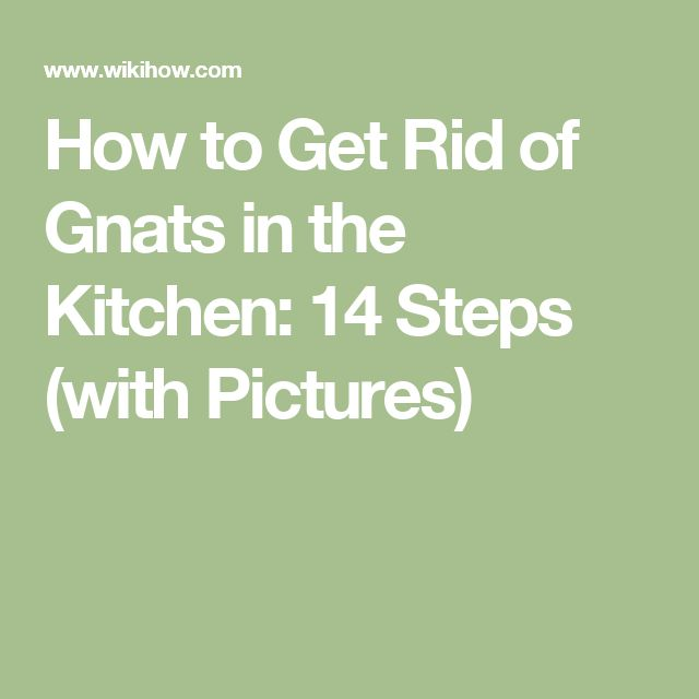How to Get Rid of Gnats in the Kitchen: 14 Steps (with Pictures)