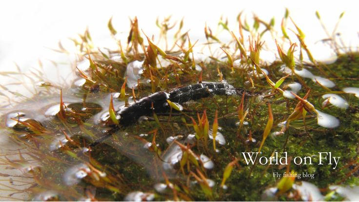 World on Fly New blog about fly tying by fly fishing enthusiaists from Czech Republic. http://worldonfly.tumblr.com/