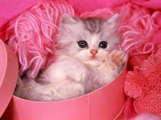 Cute Animals Such As Cats Are Also In Fashion Cat Wallpapers Now Trending Which Makes The Computer Screen More Humanly And Beautiful