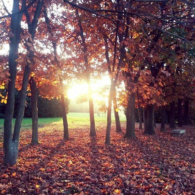 Il sole fa diventare le foglie color oro