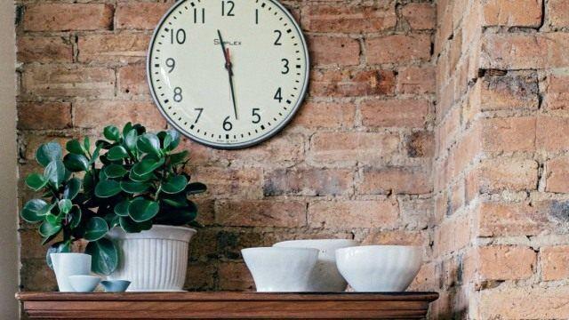 Подальше от окна — теневыносливые растения. Комнатные растения растущие в тени - Ботаничка.ru