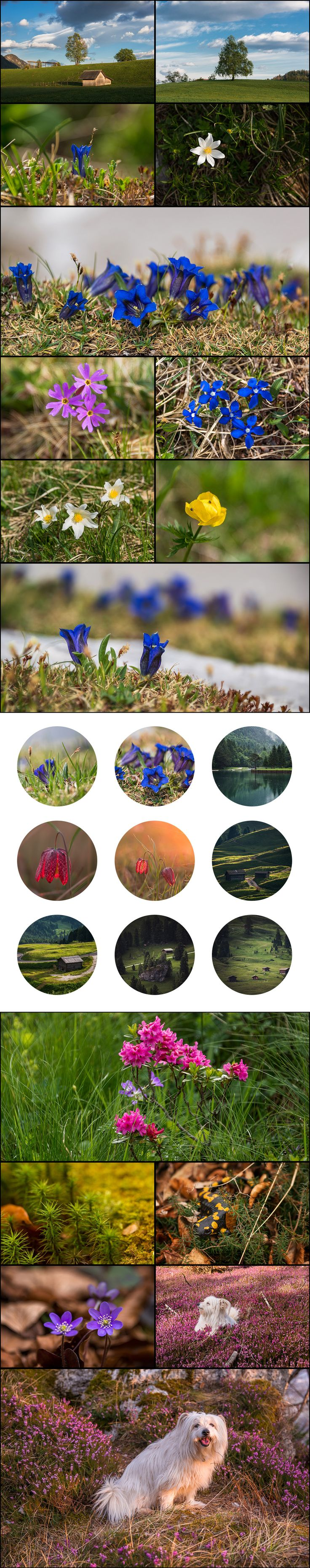 Ultimate Photo Bundle – 500+ #Stock Images | #flowers