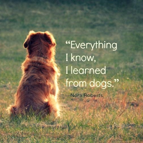 Image result for nora roberts dog quote