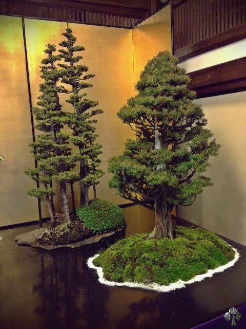Two great bonsai trees ~ one of which a stunning Yose-Ue (forest style). By: Associazione Rock'n'Bonsai