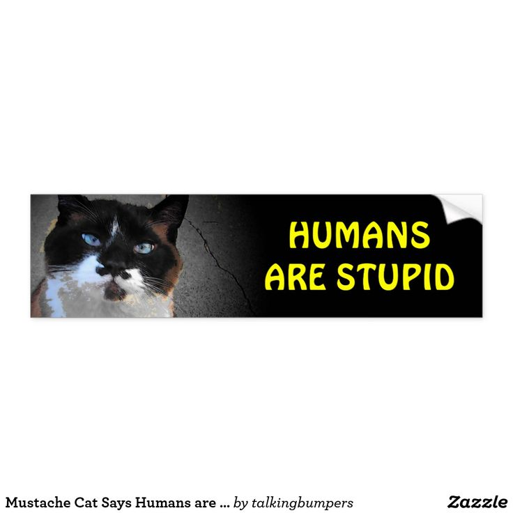 Mustache Cat Says Humans are Stupid Bumper Sticker. This is one of my bumper cats. He likes to stare down tailgaters with his commentary on the human race.  they hate us but we keep feeding them so I think he is right!