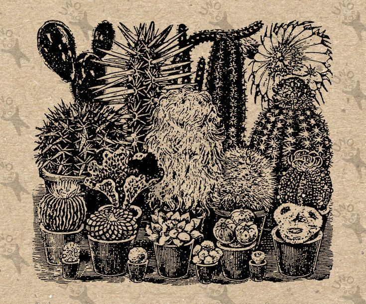 Variety of Cactus Vintage Image Instant Download picture Digital printable clipart graphic stickers, transfer, burlap, iron on etc HQ 300dpi by UnoPrint on Etsy #hq #png #bw #Ephemera #diy #old #book #illustration #gravure #inspiration #retro #antique #vintage #300dpi #craft #draw #drawing  #black #white #printable #crafts #transfer #decor #hand #digital #collage #scrapbooking #quality