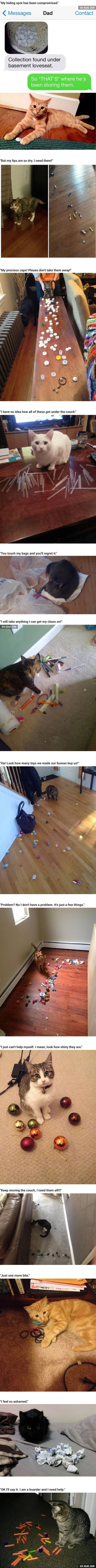 13 Hoarder Cats Who Need To Admit They Have A Problem