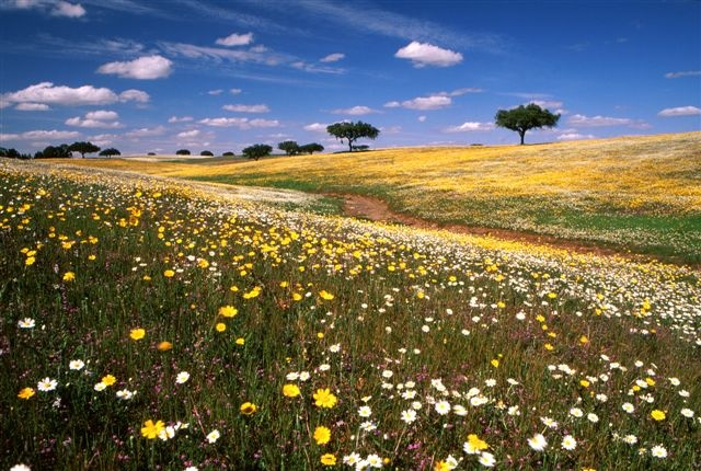 Springtime in Castro Verde - Alentejo, Portugal