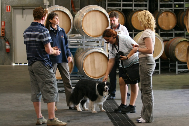 Complimentary behind-the-scenes Fox Creek winery tours are available every Monday and Friday at 10.20am...