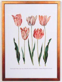 Tulipa gesneriana Poster, print size 32 cm x 44 cm 1649-1659 Johannes Simon Holtzbecher SMK.dk