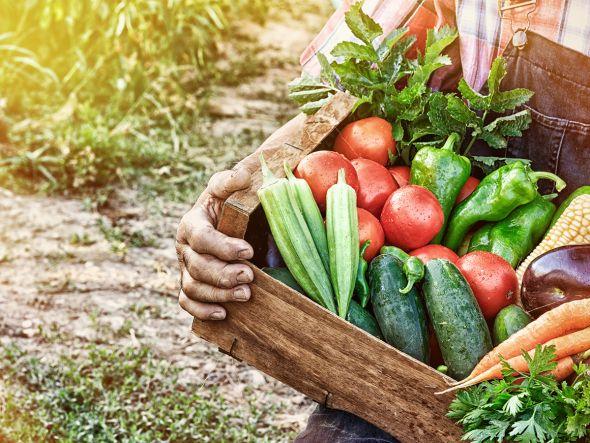 Wer als Selbstversorger lebt, der ernährt sich vor allem von dem, was im eigenen Garten oder in der freien Natur wächst und ohne Probleme geerntet werden kann. Damit es mit einer ertragreichen Ernte sicher klappt erklären wir im Folgenden, worauf es beim Pflanzen ankommt und welche Pflegetipps Sie beachten sollten.