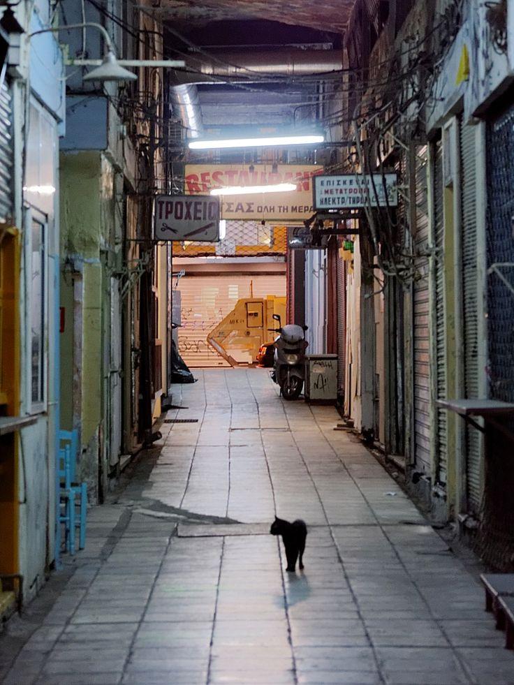 Οι μεταμεσονύκτιες βόλτες μιας γάτας στη Μοδιάνου (Ιούλιος 2017)