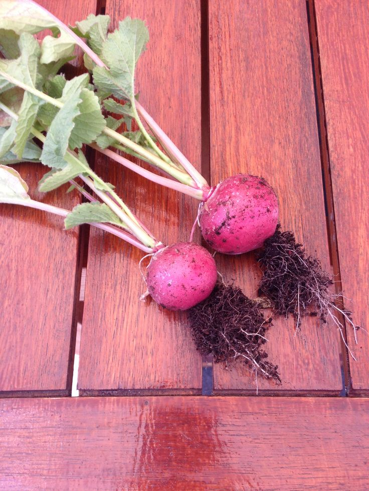 My radishes
