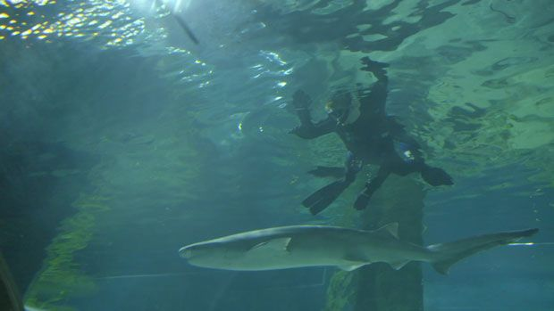 Discover Hawkes Bay - world class golf courses, swimming with sharks and of course - wine country! Watch to find out more.
