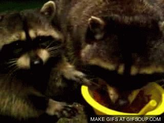 THIS | The 18 Most Important Raccoon-Related GIFs On The Internet
