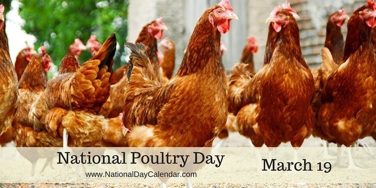 NATIONAL POULTRY DAY – March 19 | National Day Calendar