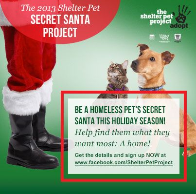 Imagine you could help find homes for homeless dogs and cats in your community… or