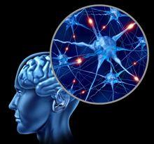 Neurosciences et apprentissages | Thot Cursus