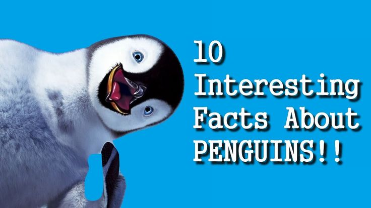 10 Interesting Facts About PENGUINS (HD)