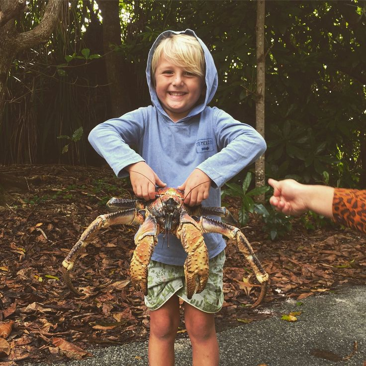 Kids and Red Crab Migration