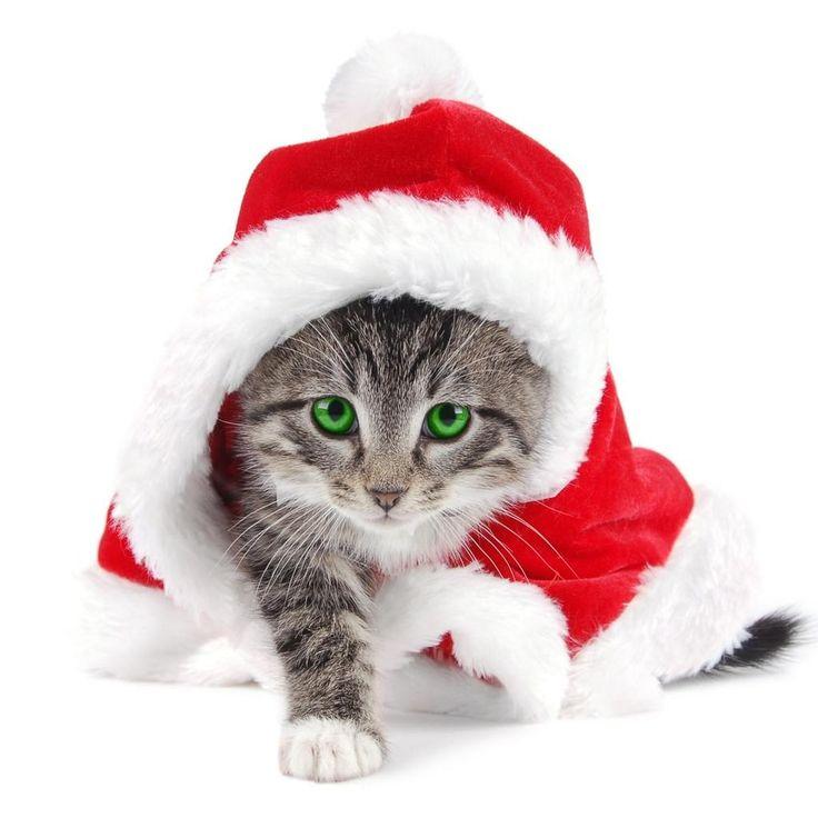 weihnachtskatzen bilder kostenlos