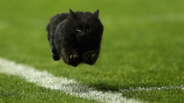 A black cat enters the field of play during the round 18 NRL match between the Penrith Panthers and the Cronulla Sharks ...