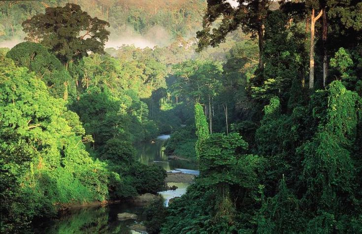 BELIZE RAINFOREST | Bosque tropical de Belize. Fuente: tropical broadleaf evergreen forest ...