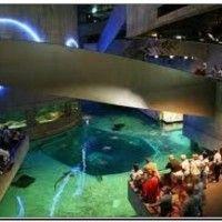 Top 114 ideas about i am a washingtonian on pinterest for Aquarium washington dc
