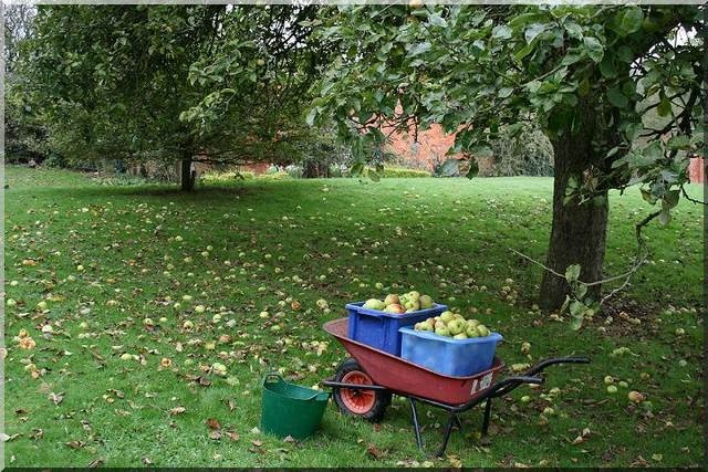 Small Scale Farming on Micro farms for Sustainable Farming and to be Self-Sufficient :windfall apples on a mini farm