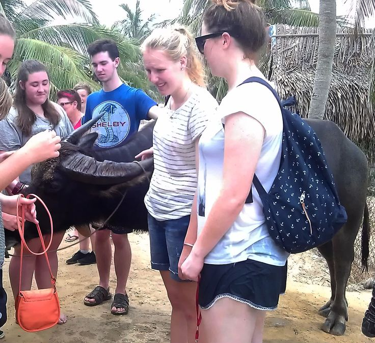 Taking the bull by the horns! #EcoTour #VietnamSchoolTours