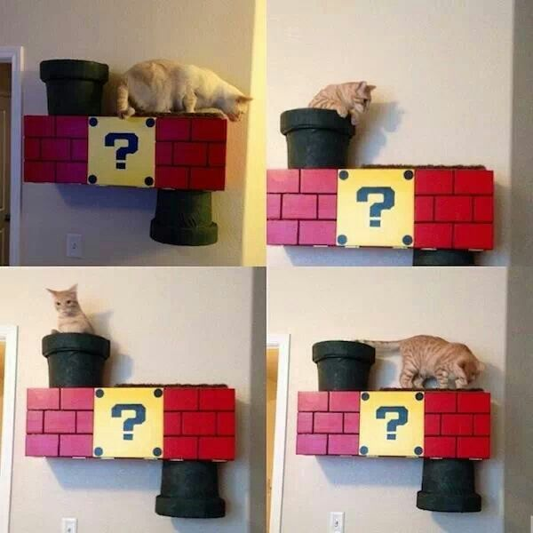 Mario cat tunnel