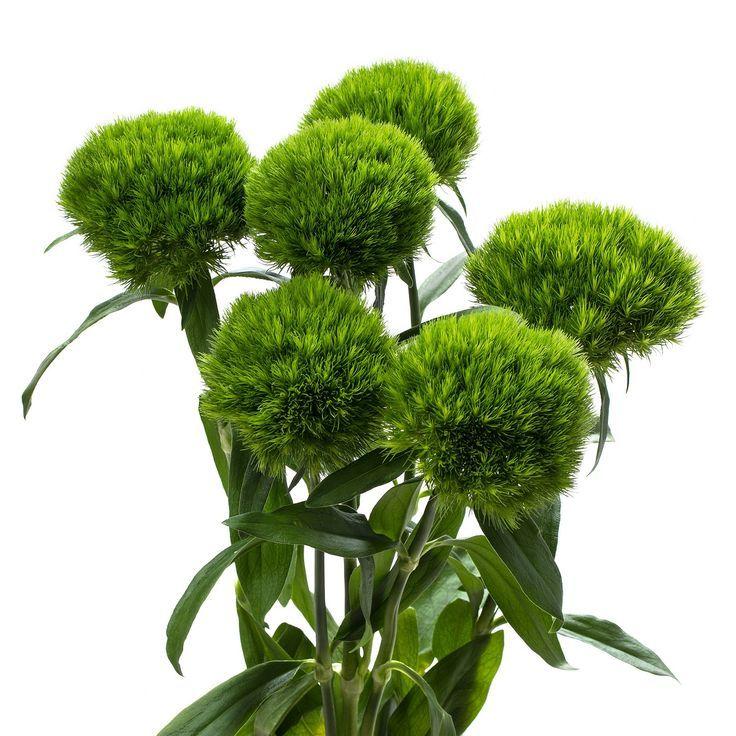 связи зелень для букетов цветов картинки купили свадебную одежду