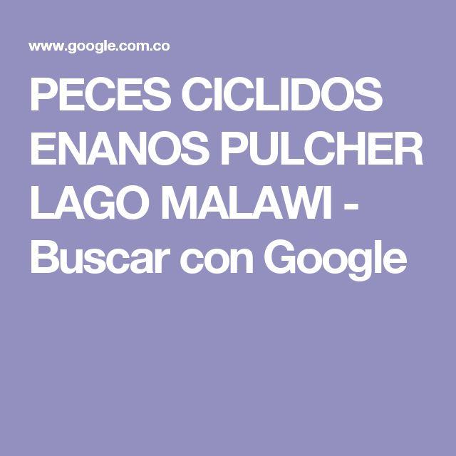 PECES CICLIDOS ENANOS PULCHER LAGO MALAWI - Buscar con Google