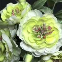 Шёлковые цветы и аксессуары. SILKPARADISE