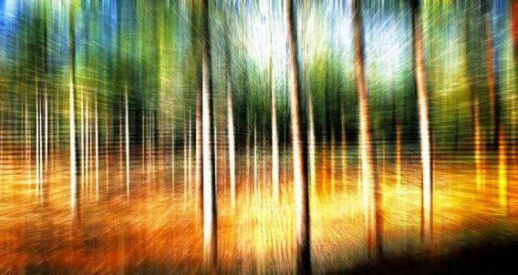 Abstracte bomenlandschap #kunst #landschap