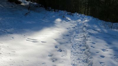 Trentatre'Trentini33人のトレント人: 積雪  #Lavarone
