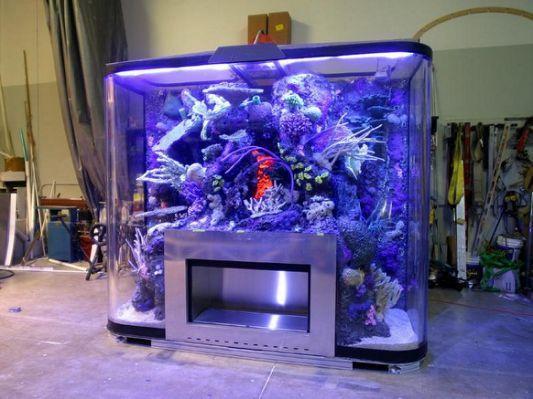 Tanks Cool Cheap Fish