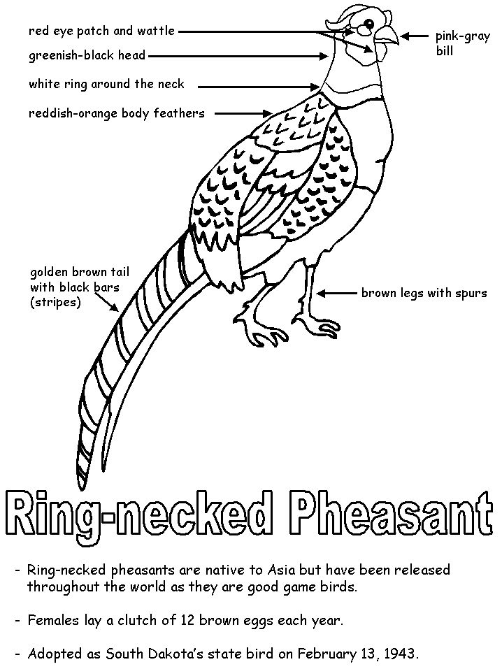 346 best images about homeschool haven on pinterest for United states symbols coloring pages