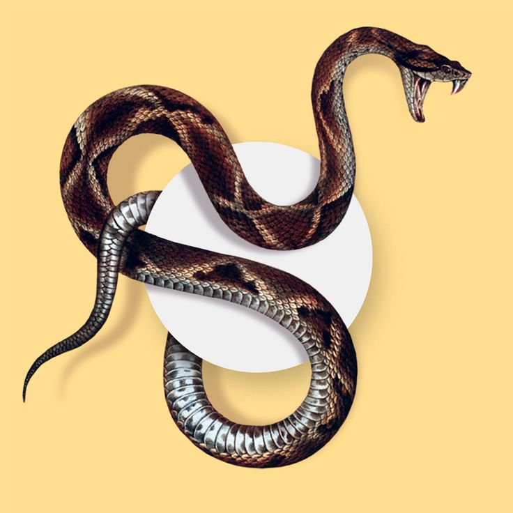 Experiements in Terror  |  Modified science illustration of Snake by Studio Lowbrow