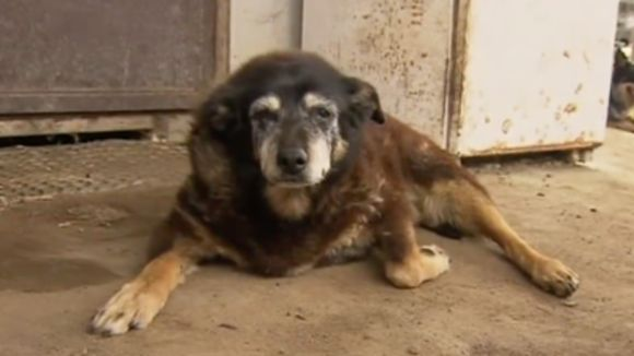 Maggie, cel mai bătrân câine din lume