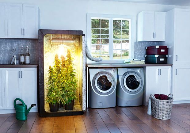 Buy Marijuana Grow Box indiegogo... concise how-to in story form