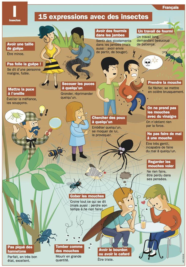 15 expressions avec des insectes
