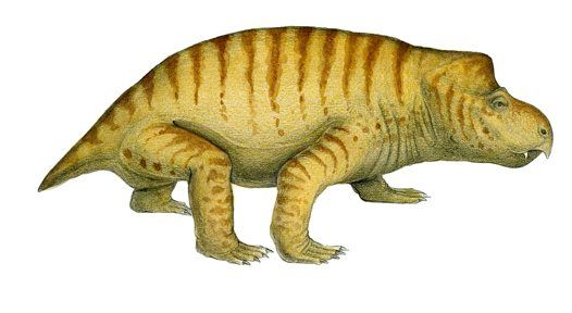 Dicynodonts were large plant-eating, mammal-like reptiles (therapsids) that survived the mass extinction event at the end of the Permian. They were on the decline in the Triassic.