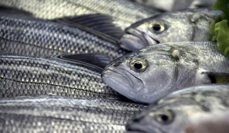 Εννιά ψάρια που καλό είναι να μην τα τρώτε