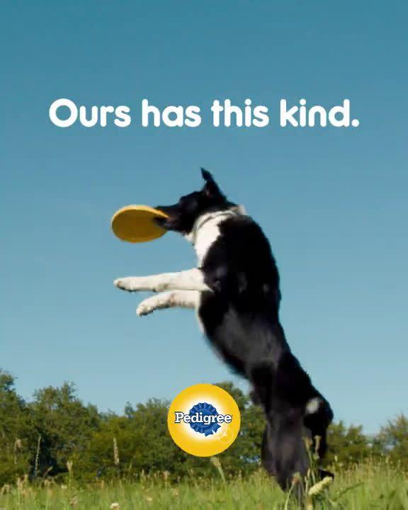 Pedigree Dog Commercial : pedigree, commercial, Pedigree, Loyalty, Program:, Catch, Commercial, Commercials,, Pedigree,
