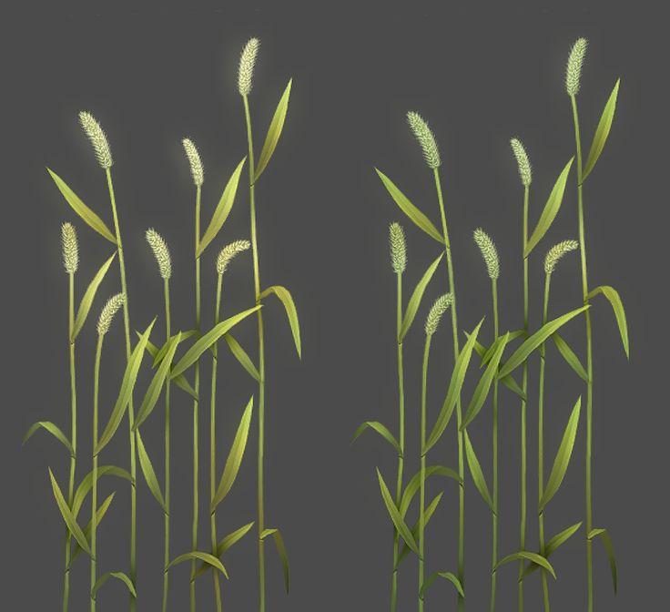 Green bristlegrass 2017/01/02