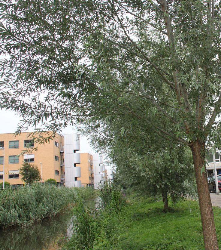 water bij Willem van Boelrestraat @HetLageLand Rotterdam,The Netherlands
