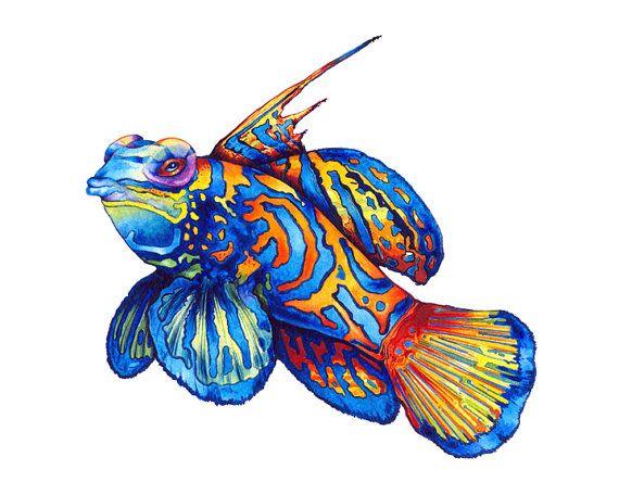 25+ best ideas about Mandarin fish on Pinterest   Beautiful sea ...