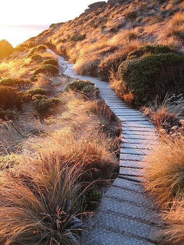 A sweet part of the trail on the Kepler Track of Fiordland National Park, New Zealand.