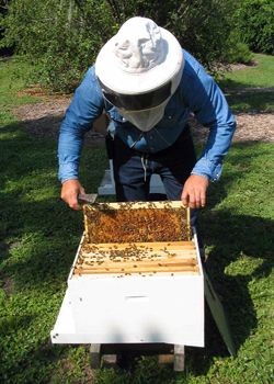 Start an Urban Beehive. Backyard beekeeper Wayne Warren offers advice for making your first urban hive a success.